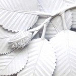 Amy_Fathers_Beech_Leaves