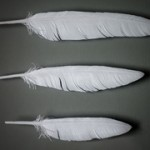 Amy_Fathers_Feathers