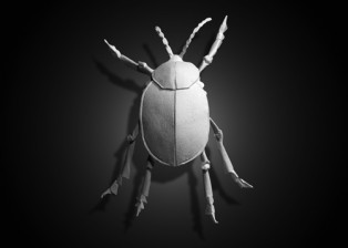 Amy_Fathers__0002_Beetle